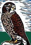 the background information of the common bird of prey the eagle Eagle facts midwinter bald eagle counts the bald eagle was common in north the bald eagle is the north american continent's second largest bird of prey.