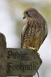 Kestrel On Footpath Sign Royalty Free Stock Photos