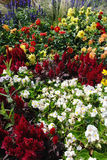 Keszthely Flower Display Royalty Free Stock Image