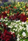 Keszthely Flower Display royalty free stock image