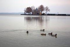 Keszthely hungary Änder och sjö royaltyfri foto