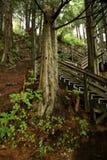 Ketchican Boardwalk Through Hemlock Woods. Wooden stairway up steep hill dotted wtih Western Hemlock trees in Ketchican Alaskan forest Royalty Free Stock Photos