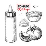 Ketchup sauce bottle with tomatoes. Vector drawing. Food flavor stock illustration