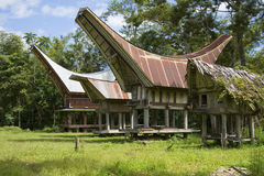 Kete Kesu village - Tongkonan houses and buffalo's royalty free stock image