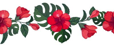Ketmie de frontière et monstera, brosse sans fin florale illustration stock