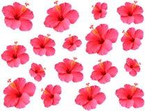 Ketmie de modèle de fleur Images libres de droits