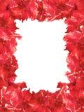 Ketmie de rouge de trame de fleur Photos stock