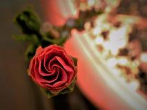 Ketmie rouge Bud Spiral Photos libres de droits