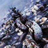 Kette auf einem Flussufer Stockfoto
