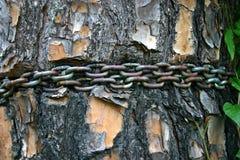 Kette um Baum Stockfotos