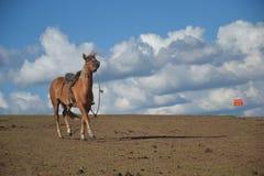 Kettete das Pferd oben an Stockfotografie