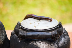 kettle and millipedes Stock Image