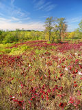 Kettle Moraine State Forest stock photos