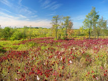 Kettle Moraine State Forest Royalty Free Stock Photo