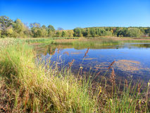 Kettle Moraine State Forest Wisconsin. Shoreline vegetation at Lake LaGrange in the Kettle Moraine State Forest of Wisconsin royalty free stock photography