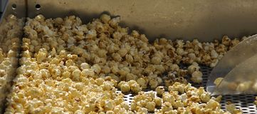 Kettlecorn Popcorn. Fresh popped kettlecorn popcorn ready to be scooped Stock Photos