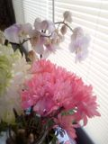Keukenbloemen royalty-vrije stock afbeelding