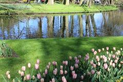 Keukenhof公园在荷兰 库存图片