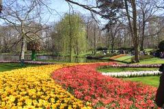 Keukenhof公园在荷兰 免版税库存照片