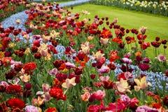 Keukenhof庭院在春天 库存图片