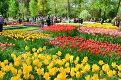 Keukenhof庭院,荷兰 五颜六色的花和开花在荷兰春天庭院Keukenhof里 库存照片