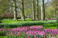 KEUKENHOF庭院,荷兰- 4月08 :Keukenhof是有7百万装饰灯泡的世界的最大的花园在区域  免版税图库摄影