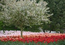 Keukenhof - Нидерланды 2014 Стоковые Фото