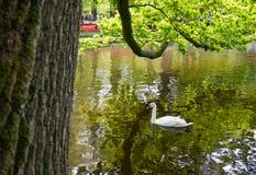 Keukenhof, Нидерланды Стоковая Фотография