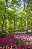 Keukenhof Royalty Free Stock Image