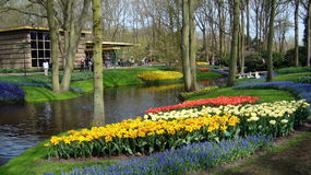 Keukenhof Amsterdam Park Royalty Free Stock Photos