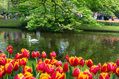 Keukenhof Stock Photography