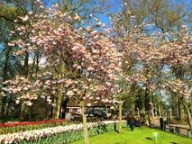 Keukenhof bloeit park, Nederland Stock Fotografie