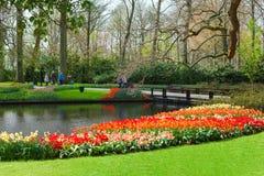 Keukenhof blommaträdgård, Nederländerna royaltyfri bild