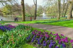 Keukenhof blommaträdgård, Nederländerna arkivfoton