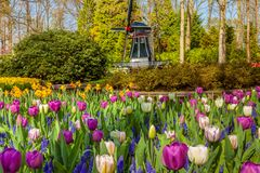Keukenhof colorful Flowers.Gardens Lisse Netherlands. Keukenhof Famous colorful Flowers.Gardens Lisse Netherlands royalty free stock photo