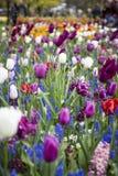 Keukenhof, de bloemtuin in Nederland Stock Afbeeldingen