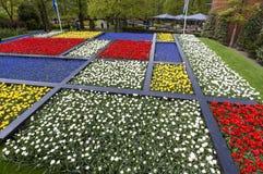 Keukenhof, de bloemtuin in Nederland Royalty-vrije Stock Foto's
