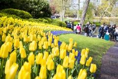 Keukenhof, de bloemtuin in Nederland Royalty-vrije Stock Fotografie