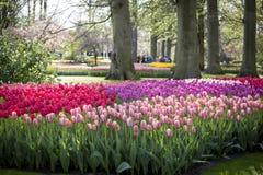 Keukenhof, de bloemtuin in Nederland Stock Foto