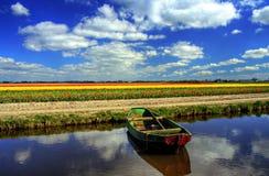 Free Keukenhof Flower Garden Stock Images - 29769184