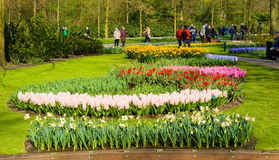 The keukenhof flower garden Stock Photos