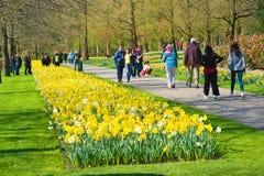 The keukenhof flower garden Royalty Free Stock Photography