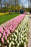 The keukenhof flower garden Stock Photo