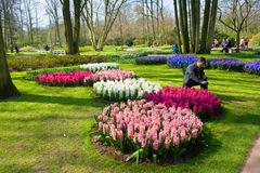 The keukenhof flower garden Royalty Free Stock Images