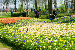 The keukenhof flower garden Royalty Free Stock Image