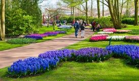 The keukenhof flower garden Stock Images