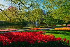 Keukenhof flower garden. Lisse, the Netherlands. Keukenhof flower garden with blooming tulip flowerbeds. One of the world`s largest flower gardens. Lisse, the stock photos