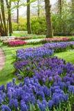 Keukenhof Flower Garden, Lisse, Netherlands Stock Images