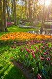 Keukenhof flower garden. Lisse, the Netherlands. Stock Images