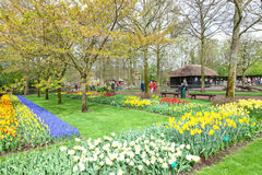 Keukenhof Flower Garden, Lisse, Netherlands Royalty Free Stock Images
